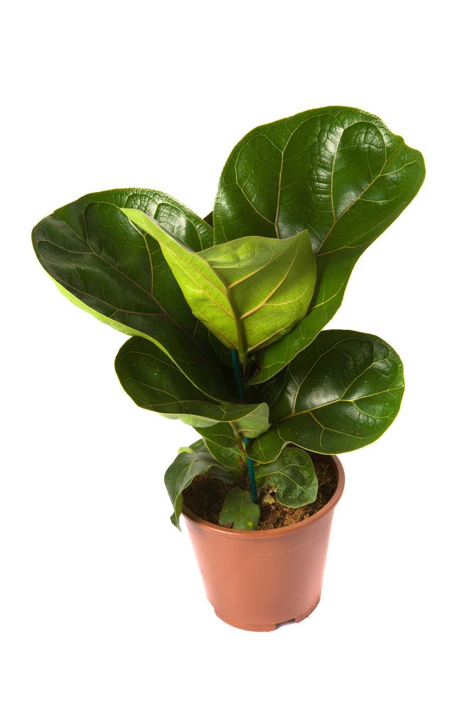 Jak Pielęgnować Rośliny Doniczkowe Pielęgnacja Kwiaty